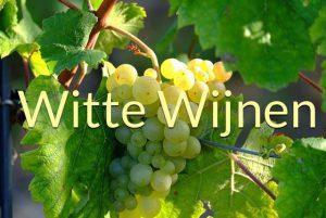 witte wijenen